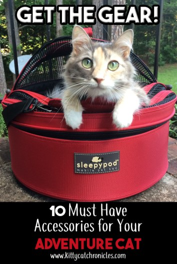 Get the Gear! 10 Must Have Accessories for Your Adventure Cat