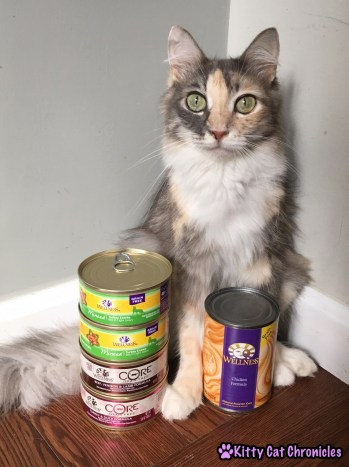Adventure Cat Travel Guide: Everything You Need! - Wellness Cat Food