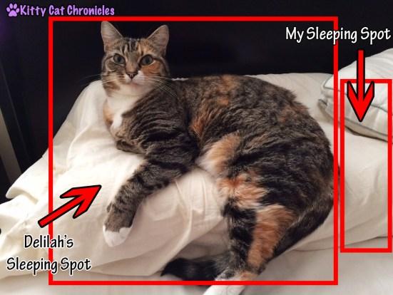 Delilah's Sleeping Spot on My Pillow