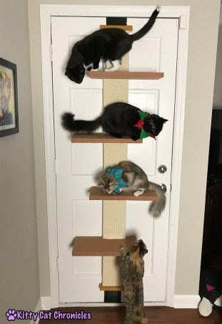 The 2017 KCC Adventure Cat Holiday Gift Guide - Pioneer Pet Cat Climber