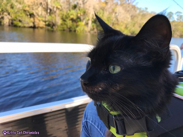 The KCC Adventure Team Tours the St. John's River - Kylo Ren, cat in life jacket