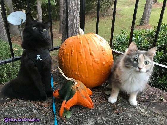 We Found The Great Pumpkin!