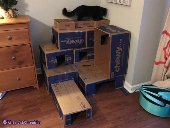 repurpose those cardboard boxes make a diy box fort kitty cat