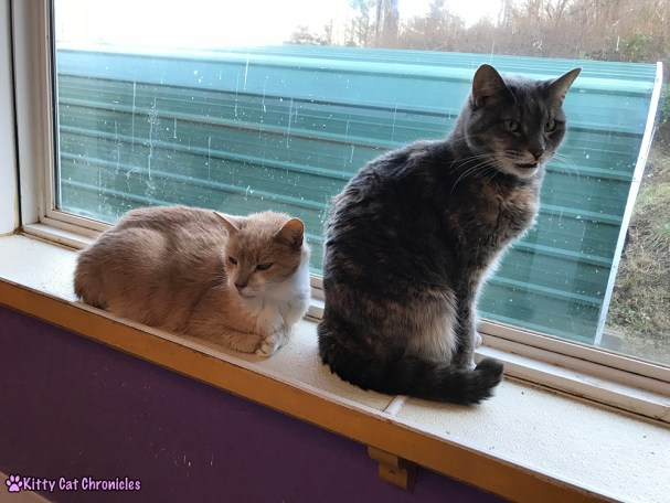 The KCC Adventure Team in Asheville: The Catman2 Shelter - adoptable cats