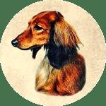 Kiva Dachshunds icon