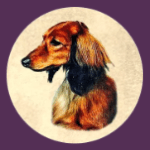 Kiva Dachshunds app icon (152)