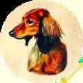 Kiva Dachshunds icon (120)
