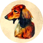 Kiva Dachshunds icon (144)