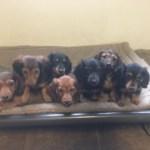 Past Pups 14