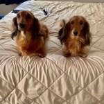 Past Pups 17