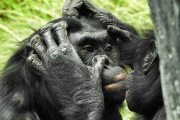 animals behavior