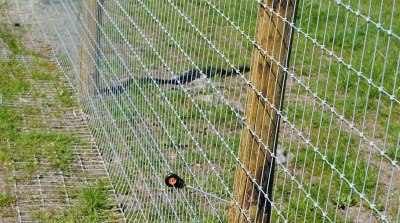 commercial-agricultural-fencing-016