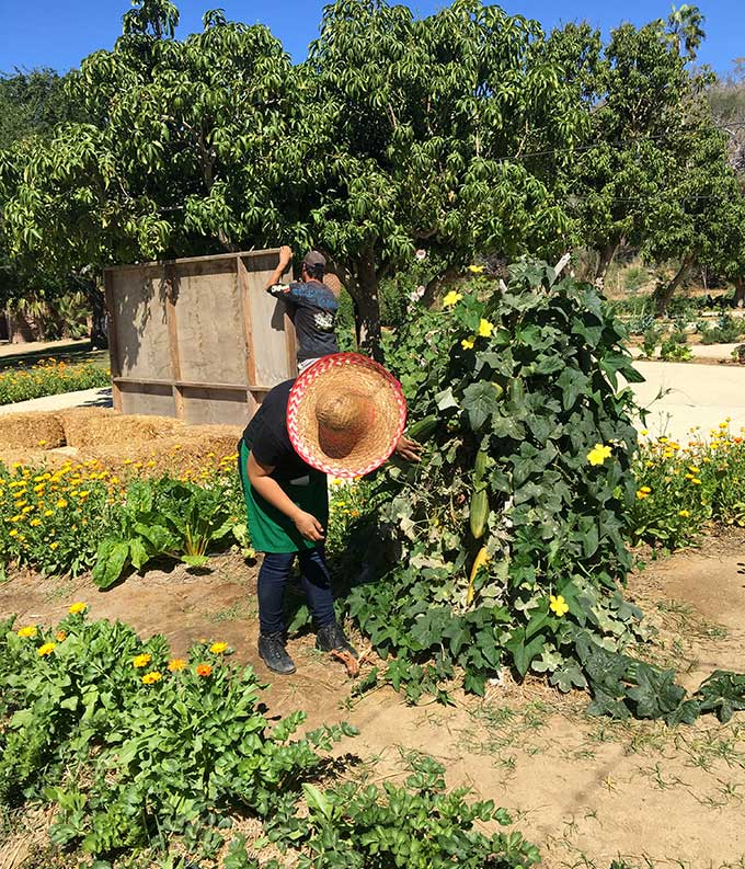 Al Fresco Cooking at Flora Farm: Try this fresh rosemary guacamole from the experts at this amazing organic farm outside Cabo San Lucas in Mexico!