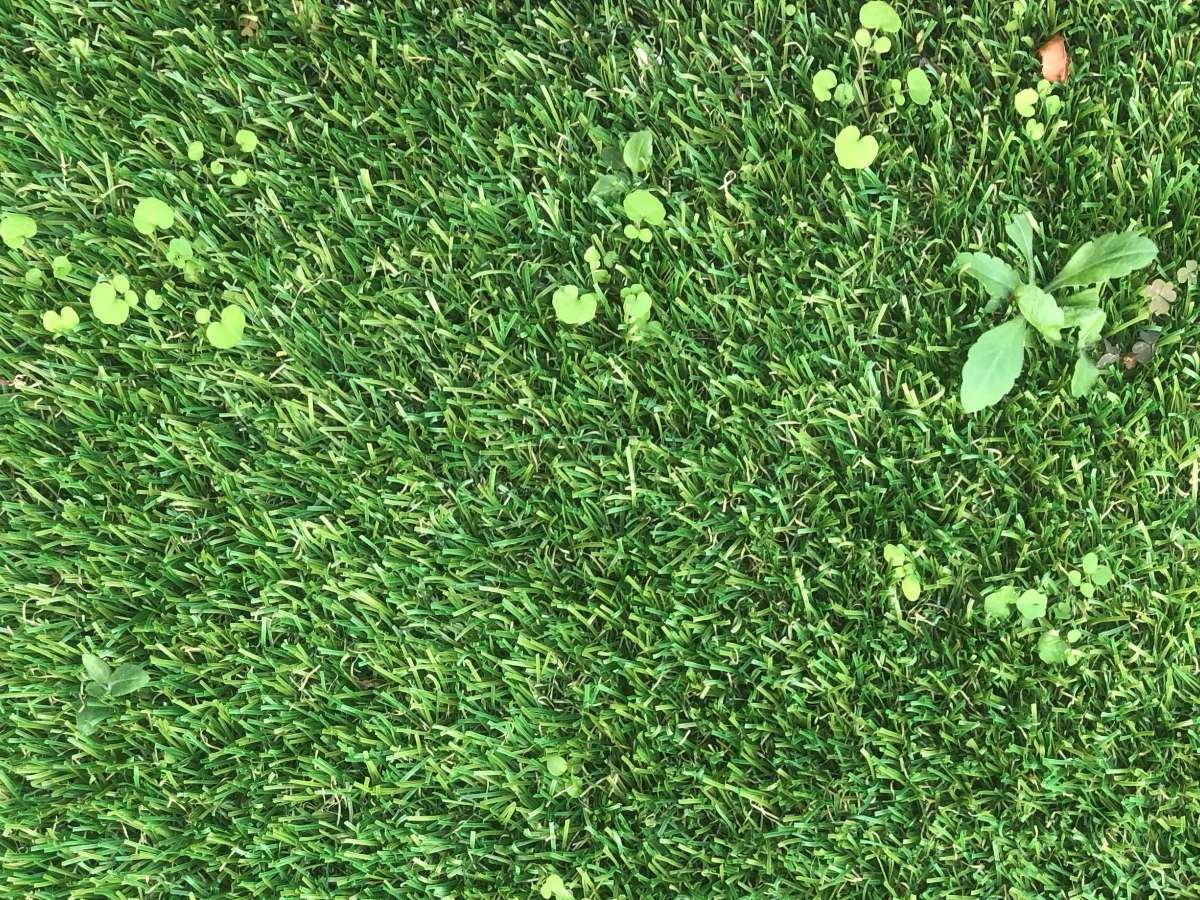 How To Get Rid Of Weeds In Artificial Turf