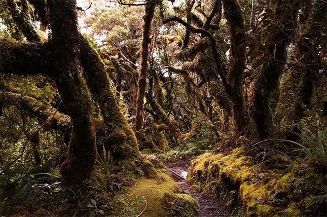things-to-do-in-Taranaki-Ngatoro-Loop-Track
