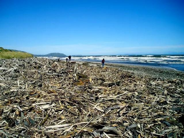Driftwood-Hunting-Kiwi-Families