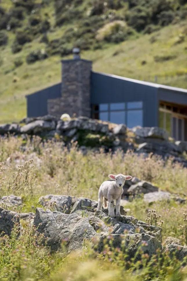 Tora Coastal Walkway Wairarapa-Stony Bay Lodge Lamb