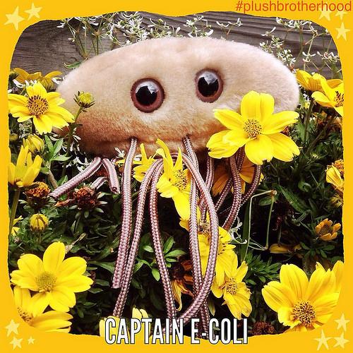 Captain E-coli - The Plush Brotherhood