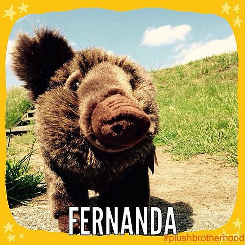 Fernanda - The Plush Brotherhood
