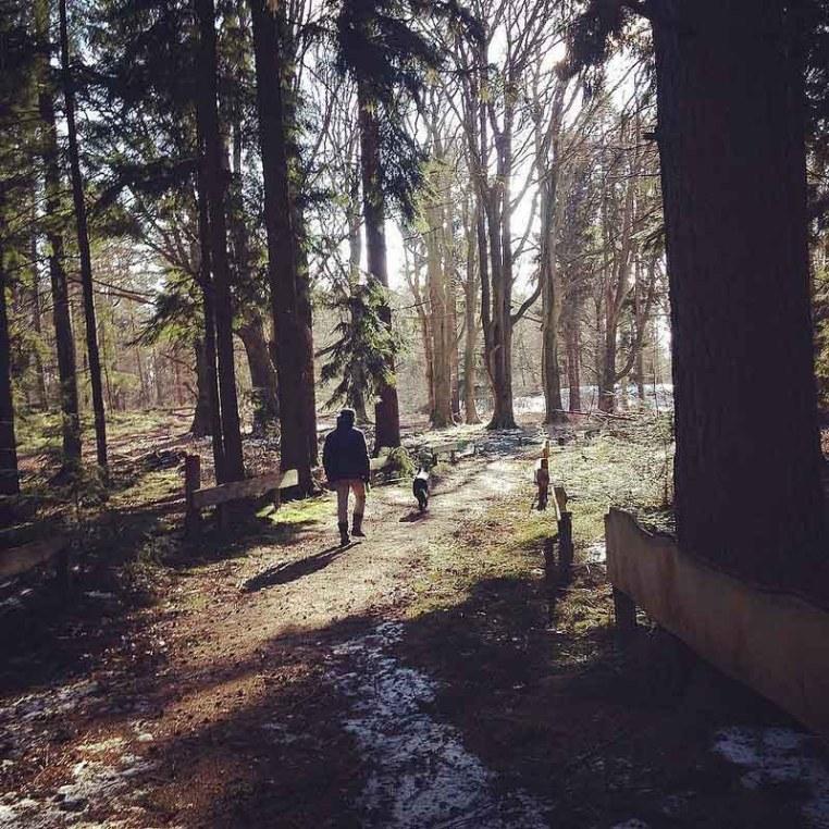 prin păduri cu Jos