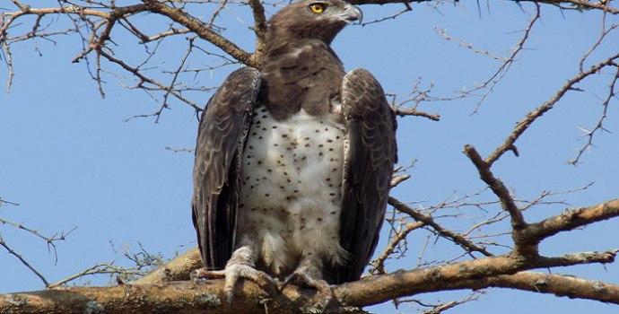 Birding tour in Uganda
