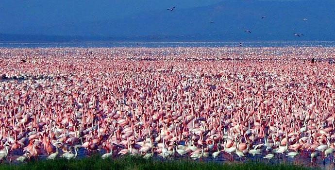 Lake Nakuru Tours