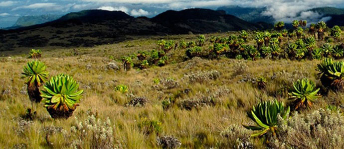 uganda national parks mount elgon national park