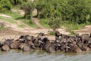 top 6 recommended activities to do in Murchison falls national park