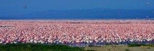 10 Days Wildlife Safaris in Kenya