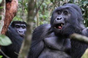 21 Days Adventure Safaris Across Uganda