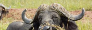 5 days kidepo valley tour Uganda