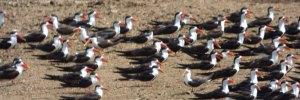 Uganda Bird watching safaris