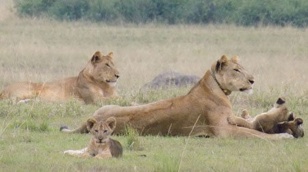 Game drive and Wildlife Safaris
