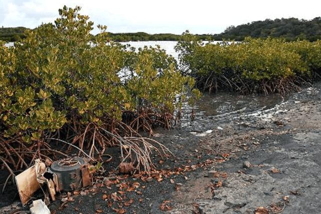 Mangrove Pantura Surabaya Banyak Direklamasi
