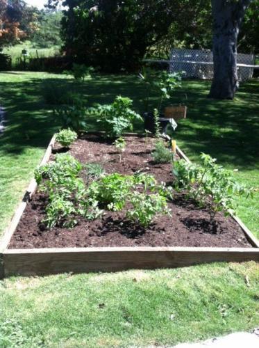 Our_herb_garden