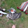 Sacred Drum ceremonie vleugel buizerd ratel lotusknop pauwenveer gebedsbuidels op gras