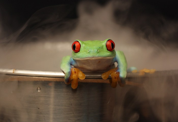 How to boil a frog V4 by AngiWallaceB