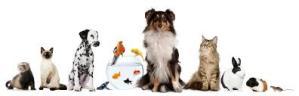 benefit of pet companions