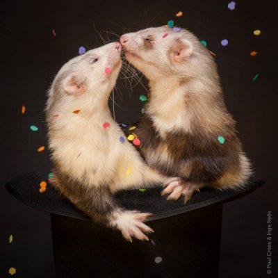 amazing animal photography
