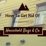 Pest Control – How To Get Rid Of Common Household Bugs & Co.