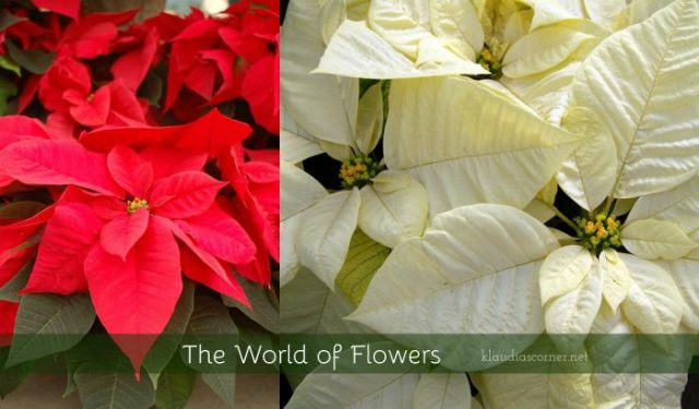 The world of flowers
