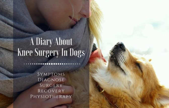 My Dog Is Limping - What's Wrong? A Diary AboutKnee Surgery In Dogs
