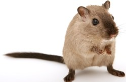 Pest Control Guide 10 pest control tips to keep pests away this summer