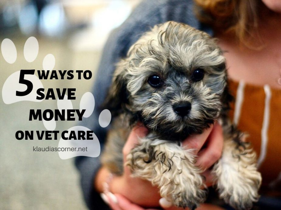 Affordable Pet Care 101 - 5 Easy Ways to Save Money on Vet Care