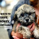 Affordable Pet Care 101 – 5 Easy Ways to Save Money on Vet Care