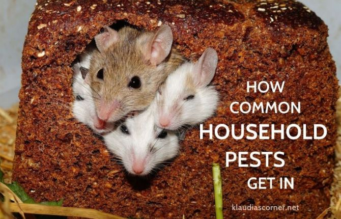 Household Pest Control Tips - How Common Household Pests Get In