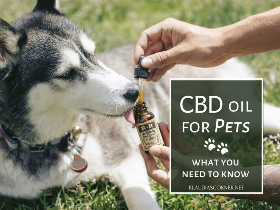 What Is CBD Oil For Pets? - What‌ ‌You‌ ‌Need‌ ‌to‌ ‌Know‌