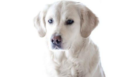 About Dog Hypothyroidism