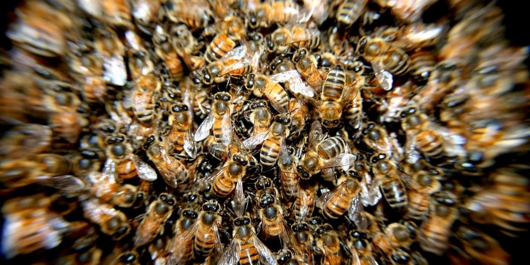 Bienen, Wespen, Hummeln: Ausstellung in der Umweltberatung