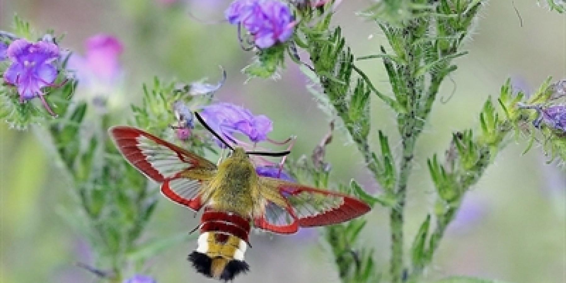 Insektenfreundliche Gartengestaltung